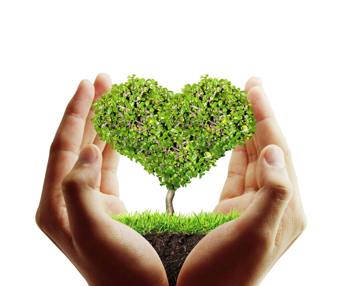 Baum in der Hand